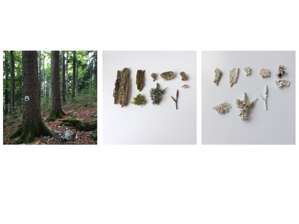Under the Skin of the Forest, Materials Library